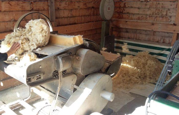 La lana di pecora usata per i nostri cuscini